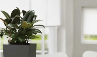 The 25 Easiest Indoor Plants to Keep Alive
