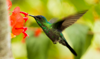 plants attract hummingbirds