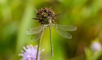 10 Plants that Attract Mosquito-Eating Dragonflies