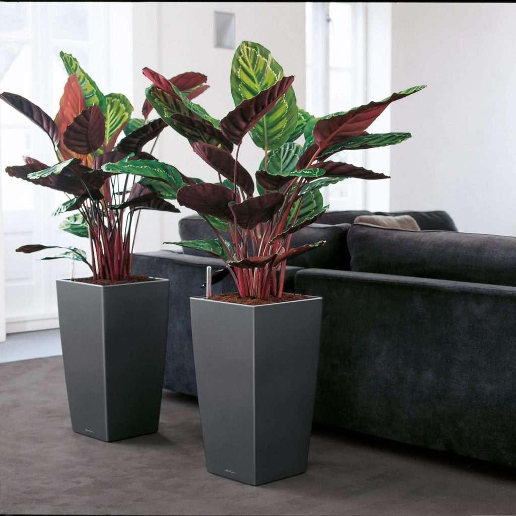 square black self-watering planters used in interior design in living room
