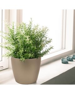 mocha metallic round tapered planter sitting in brightly lit windowsill with green rosemary sprigs