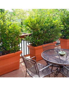 teraccotta rectangle planter box lined up along deck railing with tall green bushes