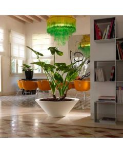 a white wide shallow planter with a tall broad leafed plant sits between a living room and dining area of a mid-century modern home